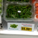 Wild Fiddleheads?
